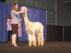 Alpaca Futurity Show & Sale