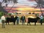Jr. National Limousin Show