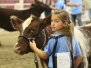 Jr. National Shorthorn Show
