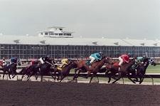 Race Track/Grandstand