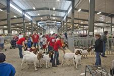 Livestock Event