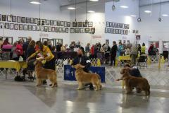 2021 AKC Dog Show