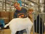 ABGA Goat Show