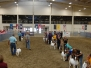 Am. Boer Goat Assn - National Show