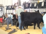 Jr. National Angus Livestock Show