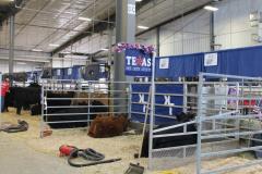 Limousin Jr. National Show